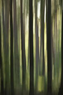 Waldrausch X von Hartmut Fittkau