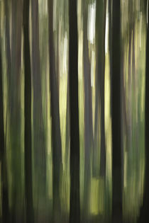 Wald-vertikal-ii