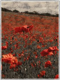 Poppy field 1 framed by Chris Atkinson