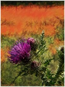 Thistle amongst poppies 1 by Chris Atkinson
