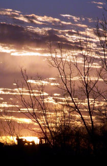 Prairie Sunset--Vertical by Diane McCarthy
