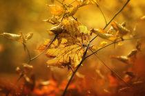 Herbstlaub von Norbert Maier