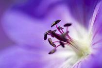 Purple Dream by Jonne Seijdel