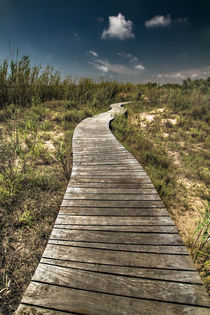 Road by Ferran Vega