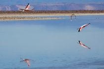 Landing by Manuel Fuentes
