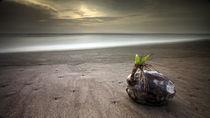Coconut bud von Ferran Vega