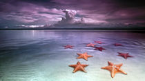 Starfish at sunset by Ferran Vega