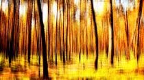 Herbstimpression von Matthias Rehme