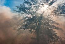 Sunshine and Smoke by photomarc