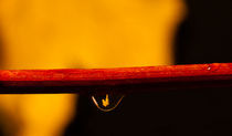 Autumn in a Raindrop von Steven Stoddart