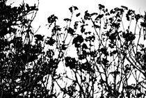 Black and White Foliage von Melanie Mayne