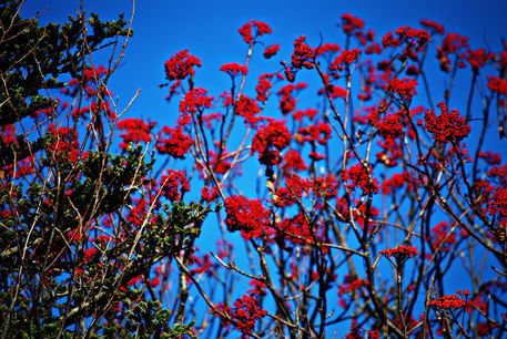 Red-branches