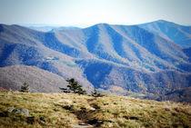 Roan Mountain 1 von Melanie Mayne