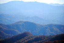 Roan Mountain 3 von Melanie Mayne