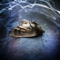 Moth by Justin Lundquist
