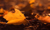 Fallen leaves by Jana Behr