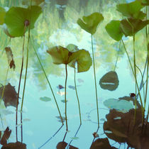 Lotus tranquility by Martine Affre Eisenlohr