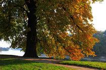 Goldener Oktober von Wolfgang Dufner