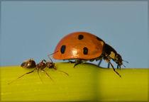 Bugs life von Boris Ulzibat