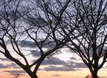 Nature photo, tree at the sun set time   by Lila  Benharush