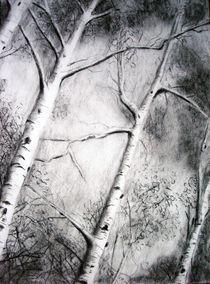 Birch Trees by Christina Schwartzman