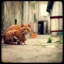 Le Chat dans l'Allée by Marc Loret