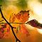 Comptine-dun-automne
