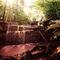 Wildwasserwaldlicht
