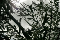 Olives by Victor Santos