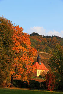 Herbst im Weinberg by Wolfgang Dufner
