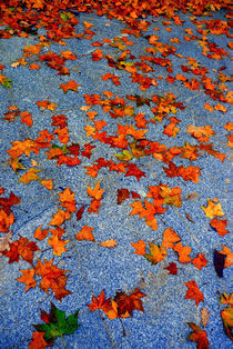 Fall leaves with one green leaf by Brian  Leng