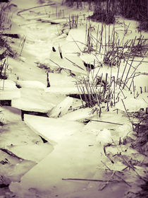 Ried im Eis von dresdner