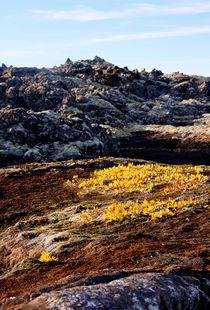 Icelandic Life v.3 von Amos Edana