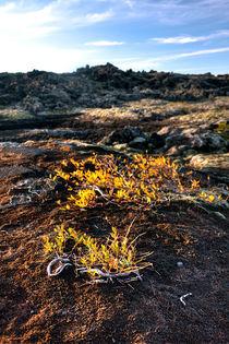 Icelandic Life v.1 von Amos Edana