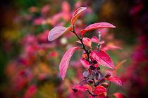 Autumn Colours in Reykjavik von Amos Edana
