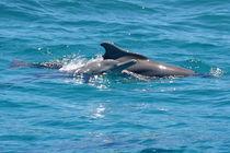 Zwei Arten - Ein Lebensgefühl by Gesellschaft zur Rettung der Delphine e.V.