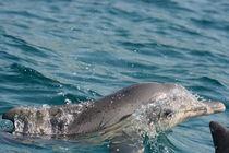 Ich kann auch springen! von Gesellschaft zur Rettung der Delphine e.V.