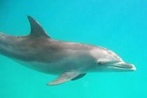 Gleich passiert was, oder nicht? von Gesellschaft zur Rettung der Delphine e.V.