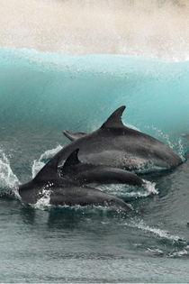 Wie gemalt by Gesellschaft zur Rettung der Delphine e.V.