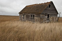 Lonely Prairie Homestead