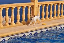 Luna am Pool von captainsilva