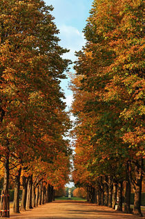 Im Herbstdom by Wolfgang Dufner