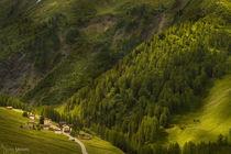 Ferret, Wallis, CH by Almira Medaric