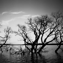 Wetland flooding by erich-sacco