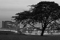 Silhouette of tree with building in the background by erich-sacco