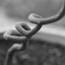 Spiral Branch by erich-sacco