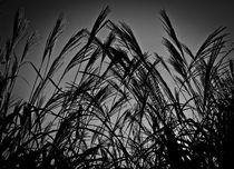 Gräser von Michael Johansen