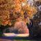 Herbstwege-kopie-kopie