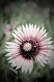 Moody Flower by Jason  Duvall