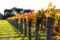 Autumn Vines 2 by Marcus Adams